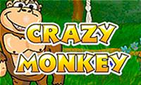 Crazy Monkey slot game